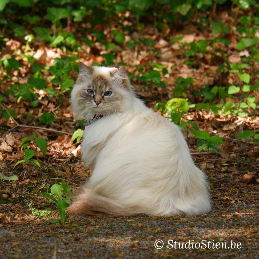 Fotografie katten fotograferen