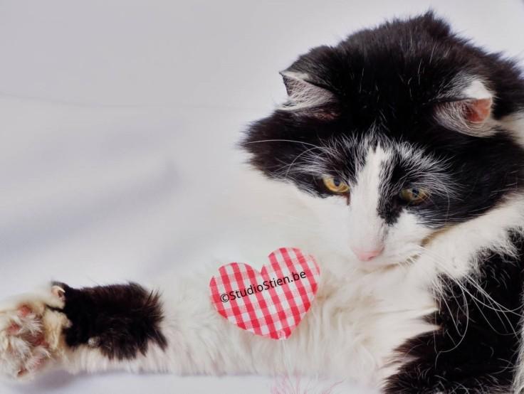 Cat embracing heart