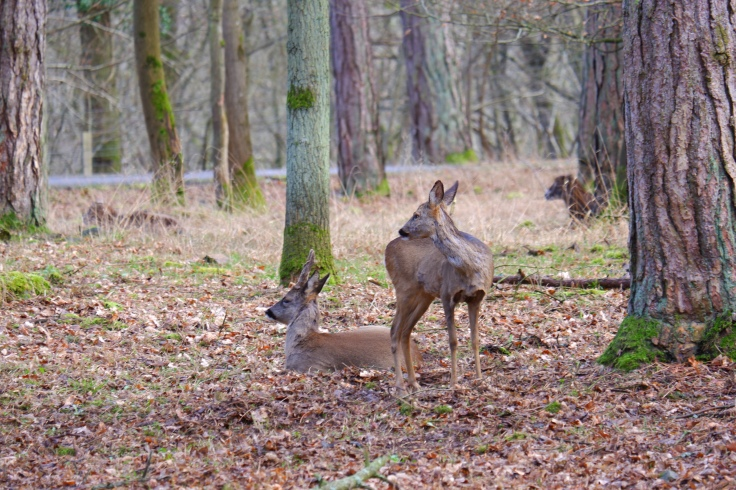Herten dierenfotografie wildlife