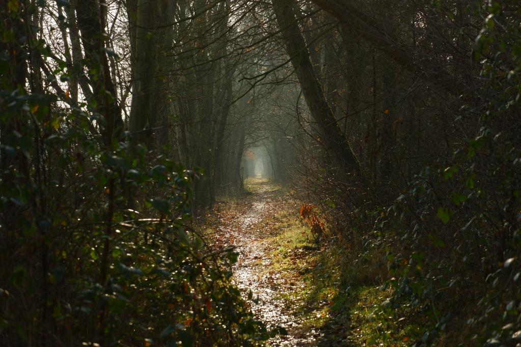 natuurfotografie landschapsfotografie fotografietips bosfotografie