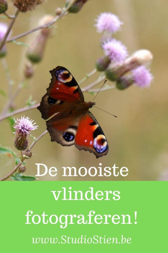 natuurfotografie vlinderfotografie insecten fotograferen fotografie fotografietips