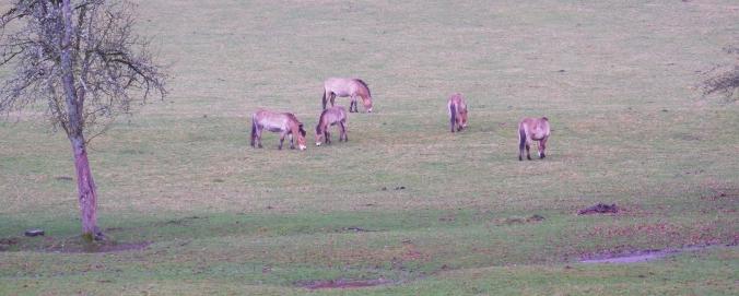 Wilde paarden in het landschap