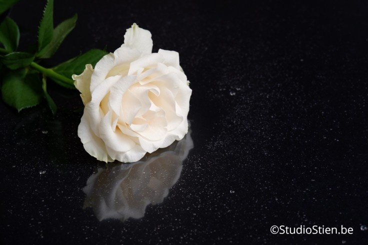 Witte roos op zwart achtergrond white rose refelction stockfoto