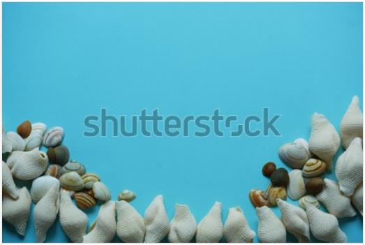 Seashels blue background Zeeschelpen blauwe achtergrond