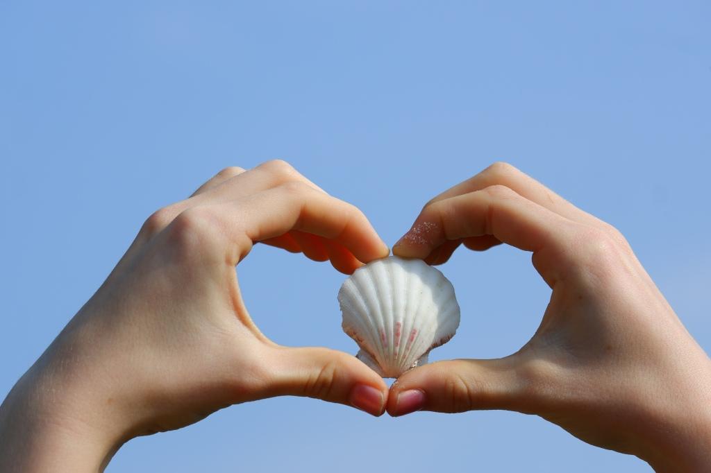 schelpen hart handen helder blauwe lucht zee