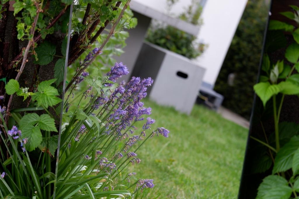 Tuin in spiegel met bloemen blauwe druifjes Garden in mirror purple flowers Fotografie