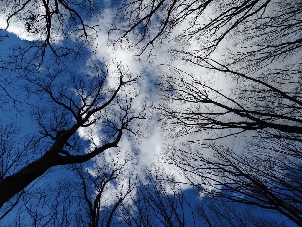 Bomen lucht wolken