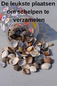 Schelpen verzamelen Benelux
