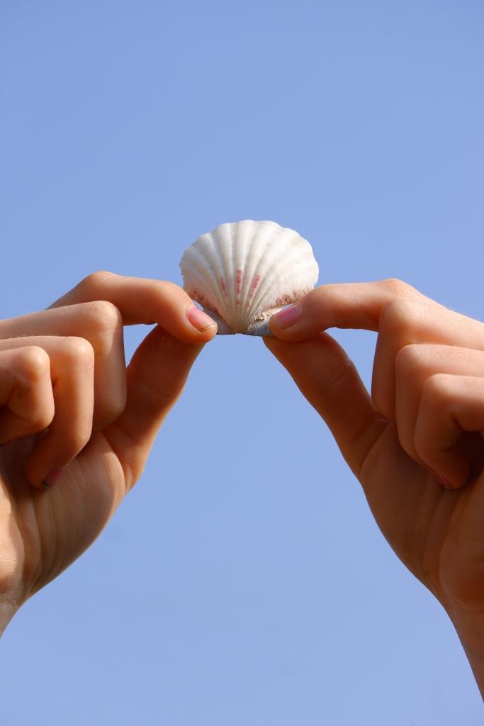 Verticale foto schelp handen blauwe lucht