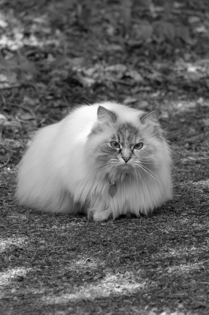 Verticale foto's kat
