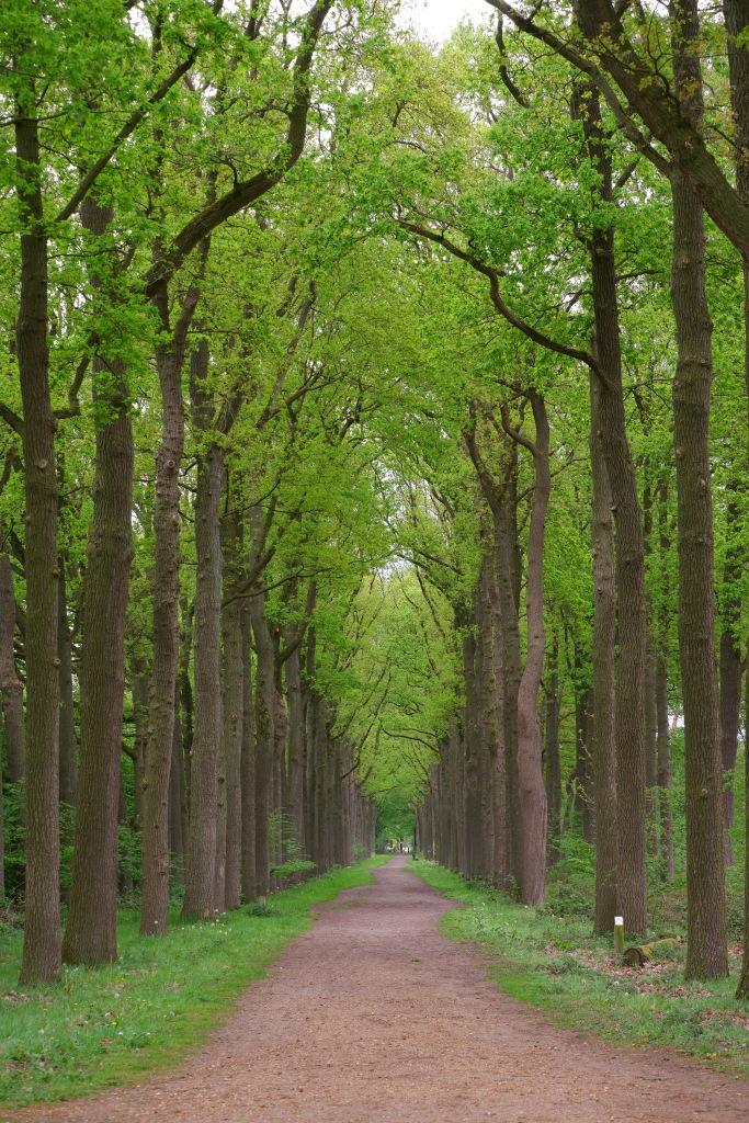 Wortel Kolonie velden panorama België wandelen