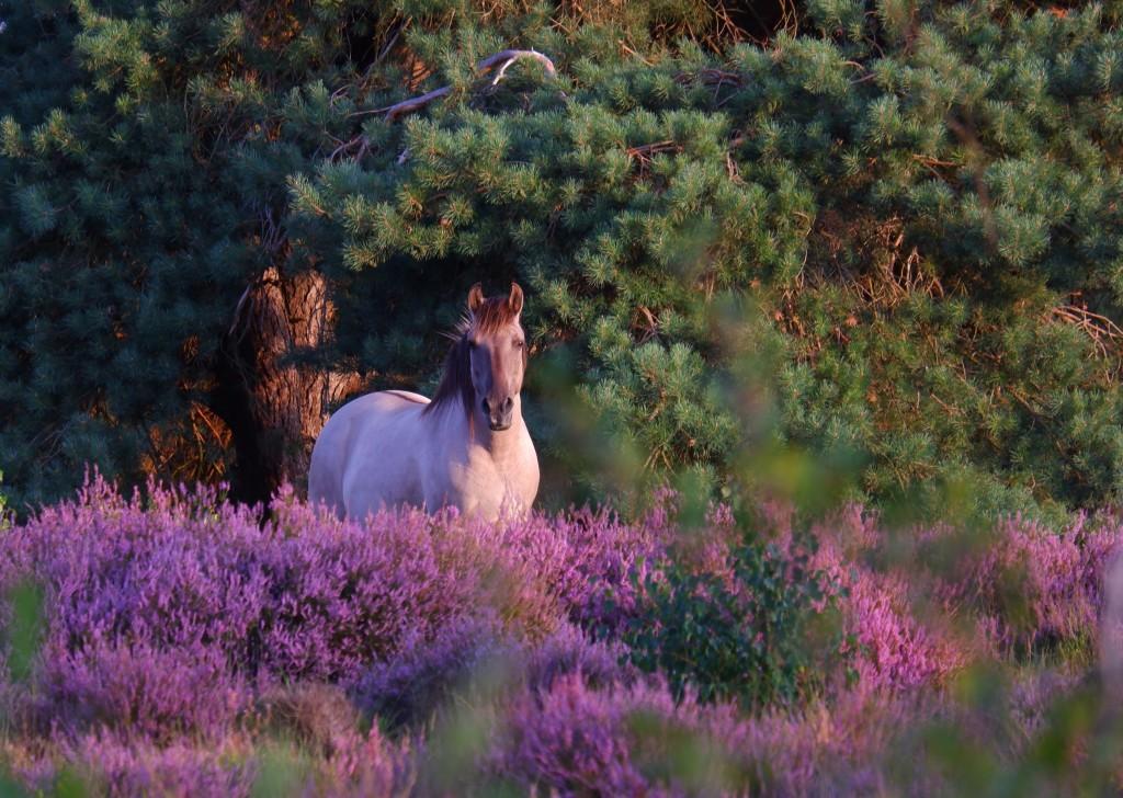 paardenfotografie natuurfotografie fotografie landschapsfotografie