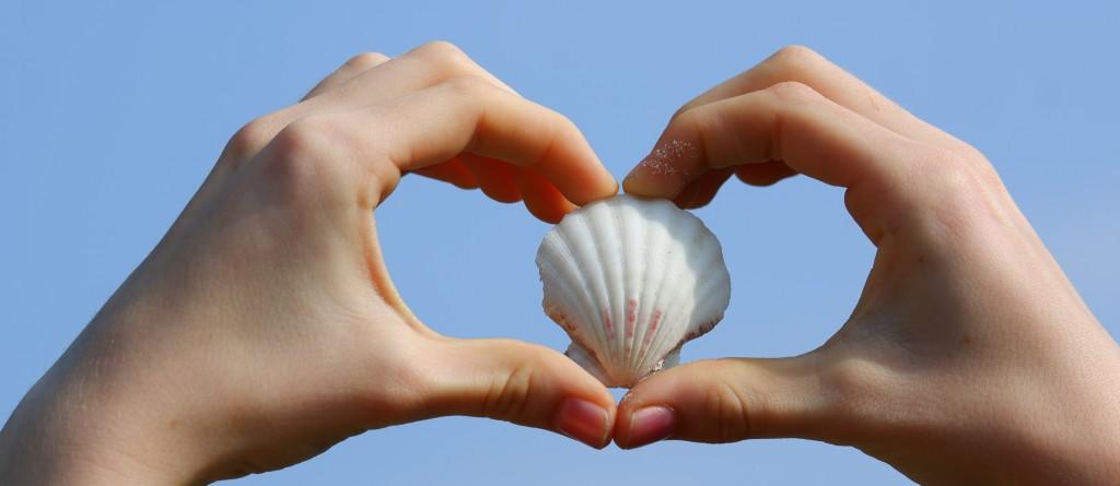 stockfotografie schelp hart handen