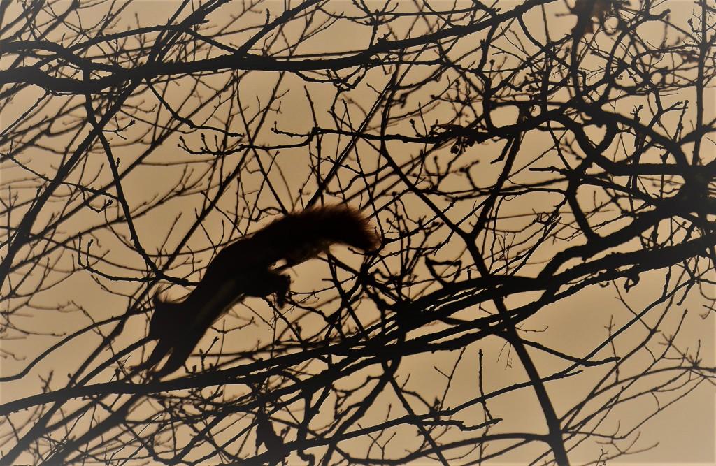 dierenfotografie natuurfotografie eekhoorn eekhoorns wildlife