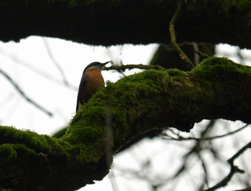 Kleine vogels fotograferen natuurfotografie vogelfotografie boomklever