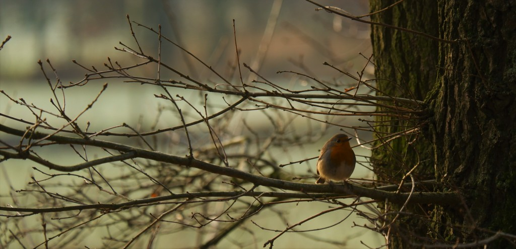 Kleine vogels fotograferen natuurfotografie vogelfotografie roodborstje