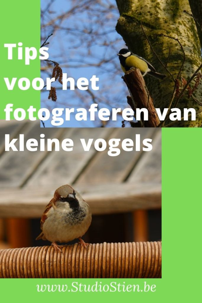 landschapsfotografie natuurfotografie  natuurfotograaf fotografie kleine vogels