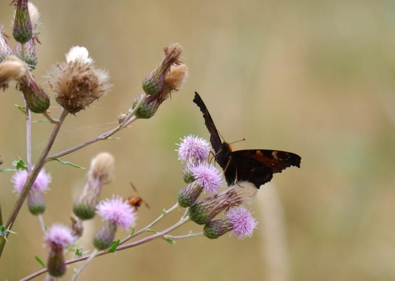 dierenfotografie natuurfotografie vlinderfotografie insecten fotograferen fotografietips fotografieblog