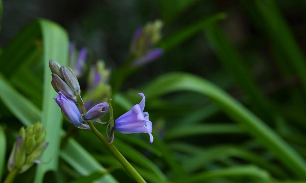 bloemenfotografie natuurfotografie fotografietips fotografieblog