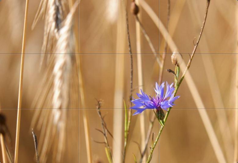 fotografie basisbegrippen fotograferen beginners natuurfotografie