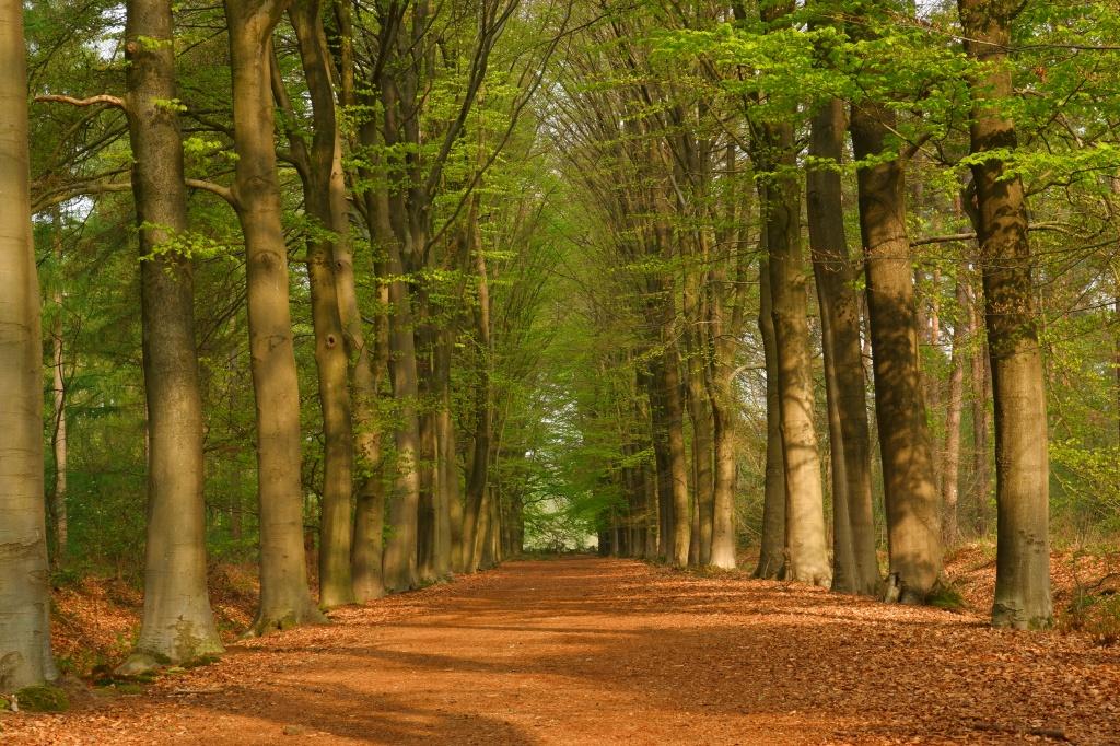 diafragma fotografietips bosfotografie basisbegrippen fotograferen