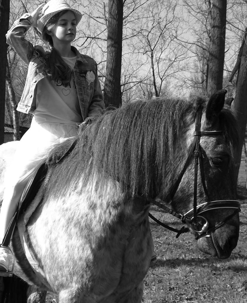 dierenfotografie natuurfotografie paardenfotografie communie fotograferen fotografietips fotografieblog
