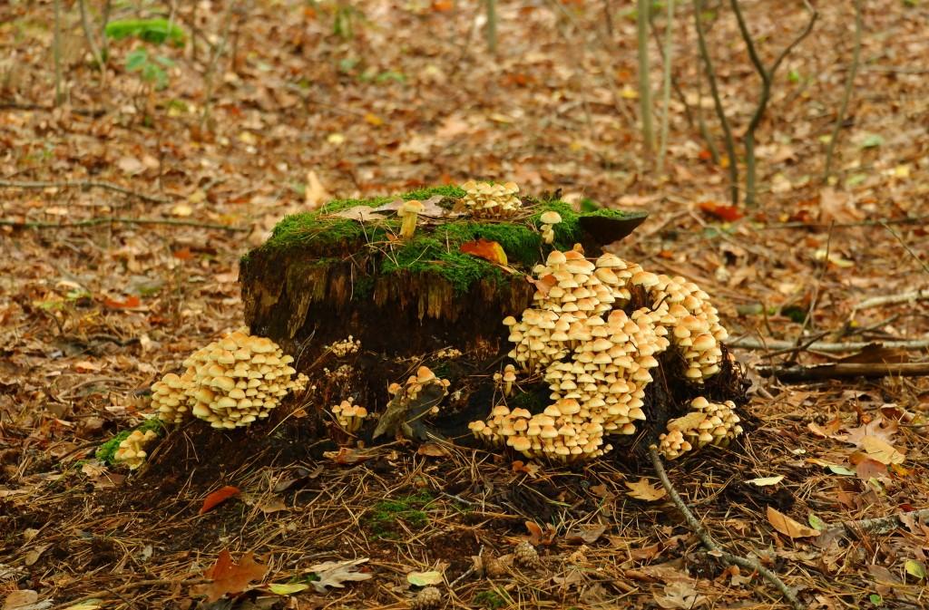 paddenstoelen fotograferen fotografie herfstfotografie natuurfotografie fotografietips fotografieblog