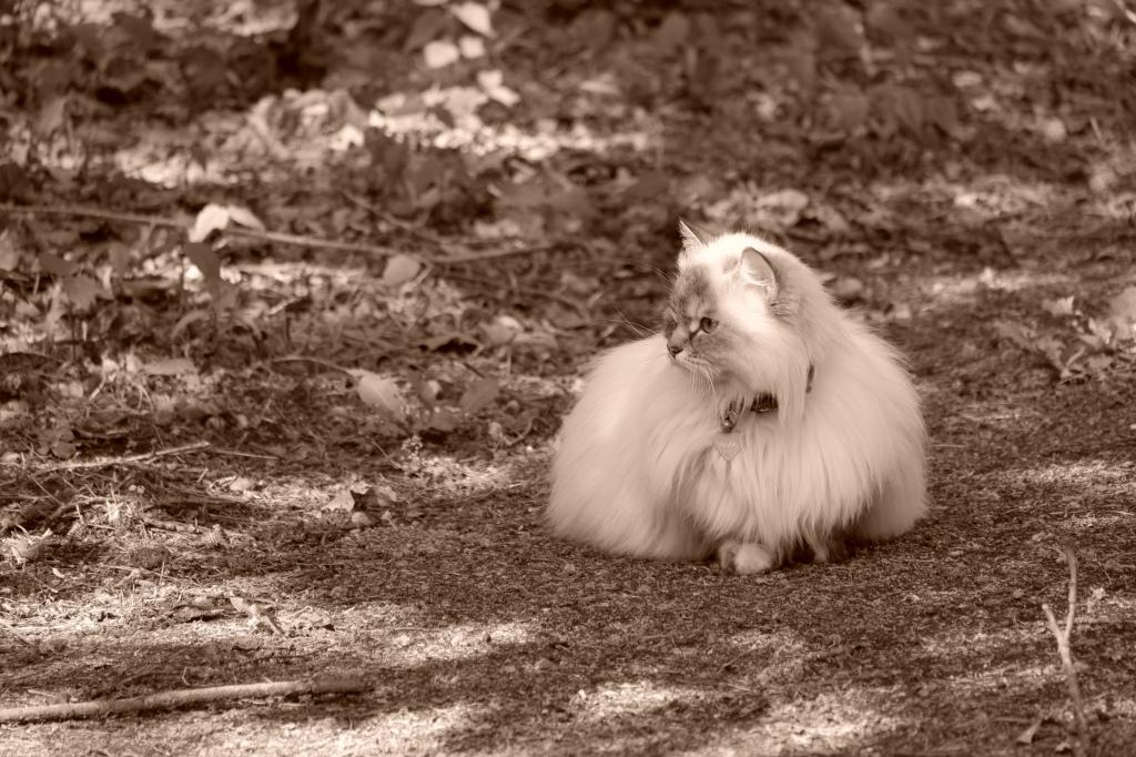 dierenfotografie natuurfotografie kattenfotografie katten huisdieren fotograferen fotografietips fotografieblog