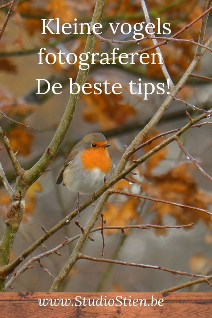 natuurfotografie vogelfotografie vogels fotograferen kleine fotografietips fotografieblog