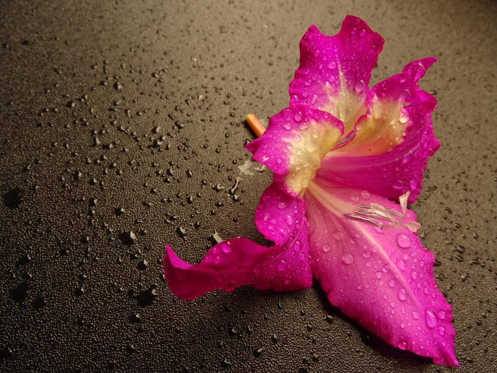 natuurfotografie bloemenfotografie fotografie fotografietips