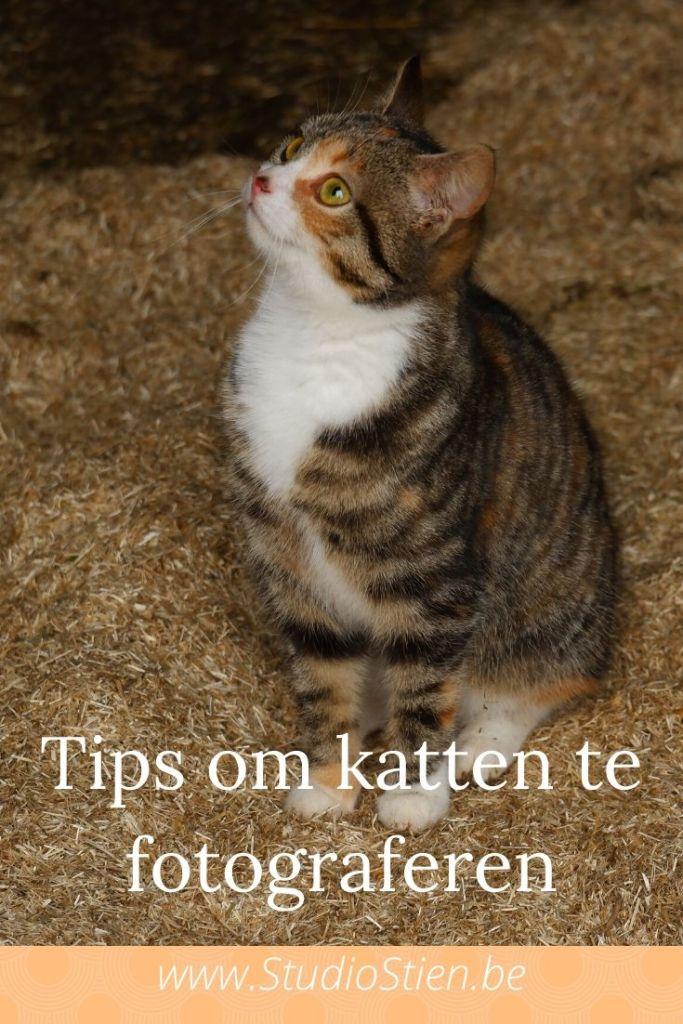 kattenfotografie dierenfotografie natuurfotografie fotografietips katten fotograferen
