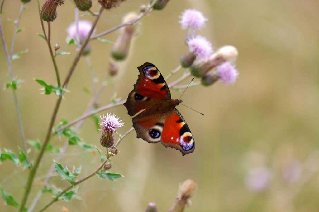 diafragma fotografie basisbegrippen fotograferen fotografietips vlinderfotografie natuurfotografie