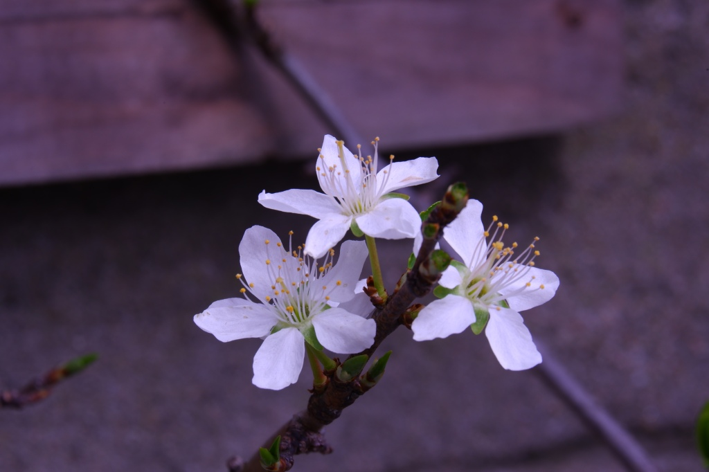natuurfotografie witbalans basisbegrippen fotograferen beginners