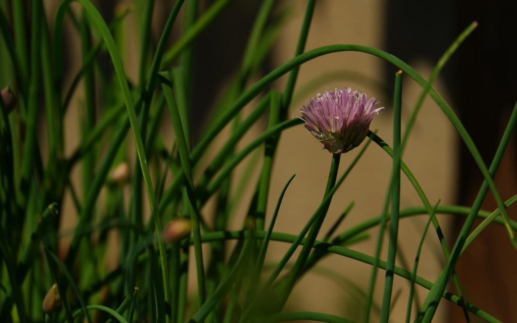 fotografie natuurfotografie fotografietips kruiden bloemenfotografie
