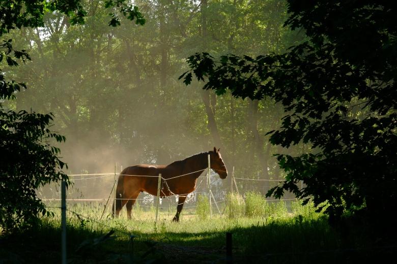 paardenfotografie dierenfotografie natuurfotografie fotografietips fotograferen paarden dieren