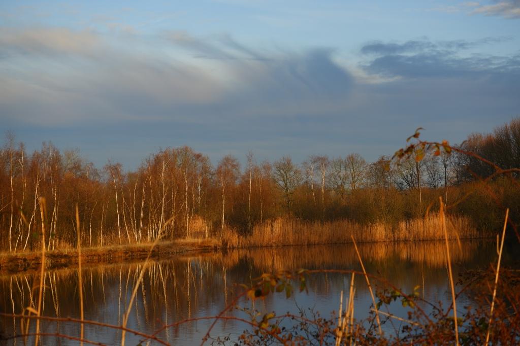 fotografie natuurfotografie fotografietips landschapsfotografie bosfotografie meelicht belichting