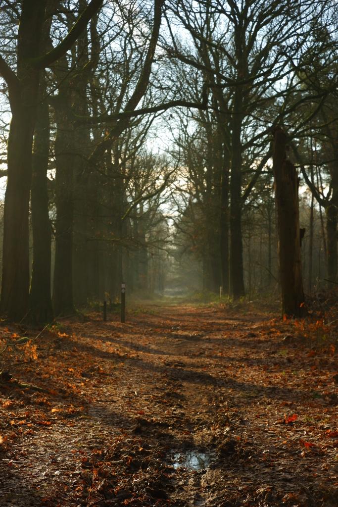 fotografie natuurfotografie fotografietips landschapsfotografie bosfotografie zijlicht belichting