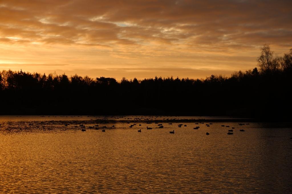 belichting fotografie fotografietips natuurfotografie landscahpsfotografie gouden uurtje