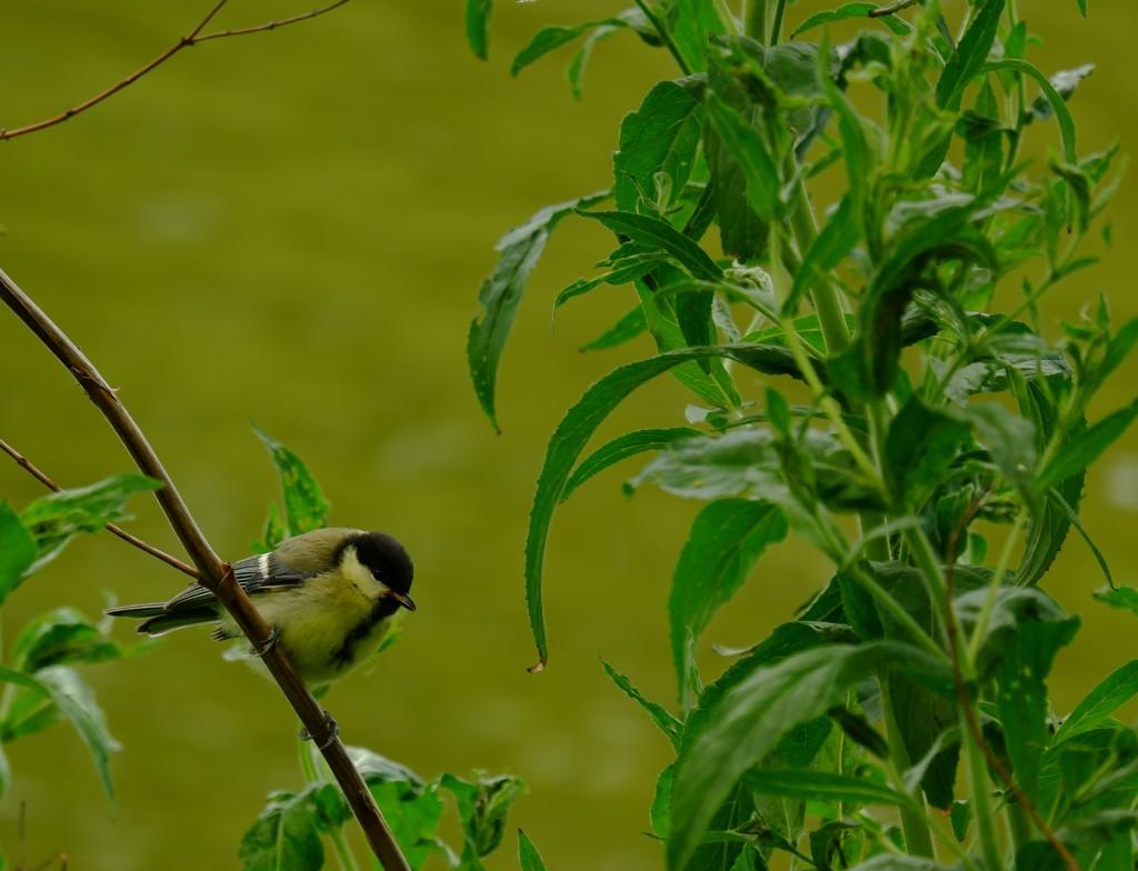 fotografietips fotograferen vogel basisbegrippen fotografie natuurfotografie